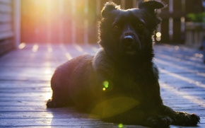 Картинка взгляд, друг, Собака, черная