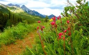 Обои небо, трава, пейзаж, цветы, горы, тропинка