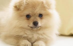 Картинка милая, собака, красивая