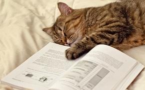Картинка кошка, кот, лапа, спит, лежит, книга, страницы