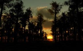 Обои тучи, деревья, Закат солнца, вечер, лес