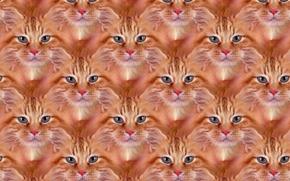Обои кошка, кот, текстура, рыжий, пушистик, Рыжик