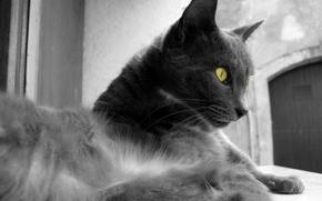 Обои глаза, цвет, черно-белая, Шерсть