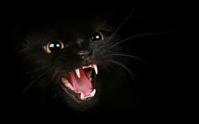 Картинка кот, усы, клыки, оскал, злой, котяра, шипит, злое усатое животное