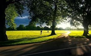 Картинка зелень, небо, трава, солнце, деревья, пейзаж, природа, фон, движение, widescreen, обои, листва, человек, тень, луг, ...