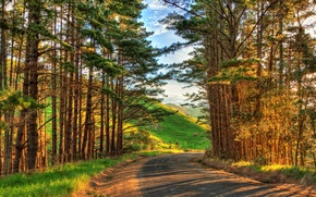 Картинка дорога, небо, трава, облака, деревья, пейзаж, закат, цветы, горы, природа, путь, восход, дерево, пейзажи, HDR, ...