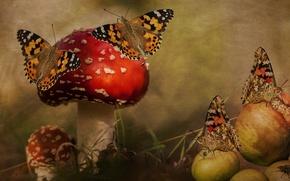 Картинка лес, бабочки, рендеринг, муха, коллаж, яблоки, грибы, обработка, арт, мухоморы, обои от lolita777