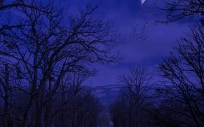 Картинка дорога, осень, небо, деревья, горы, птицы, ночь, природа, луна, moon, Nature, силуэты, road, sky, trees, …
