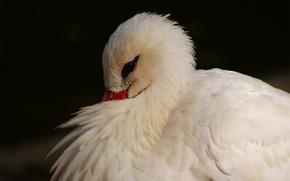 Картинка цапля, спряталась, белая, оперение, птица