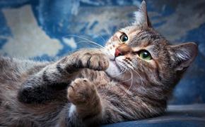 Картинка кошка, глаза, кот, взгляд, поза, фон, голубой, портрет, разводы, лапы, мордочка, лежит, выражение, зеленоглазая