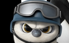 Обои bird, white, penguin, black, feathers, animal, seal, warrior, Short Fuse, harp seal, soldier, helmet, fur, ...