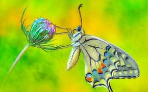 Картинка цветок, макро, Бабочка