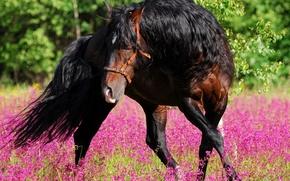 Обои цветы, конь, танец, природа