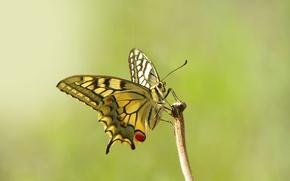 Картинка глаза, бабочка, ветка, усики, eyes, butterfly, branch, antennae, open wings, крыльями