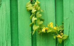 Картинка widescreen, обои, забор, растение, оса, wallpaper, широкоформатные, background, fence, обои на рабочий стол, wasp, полноэкранные, …