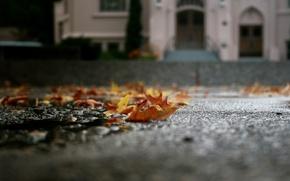 Картинка осень, асфальт, листья, макро, лужа, опавшие