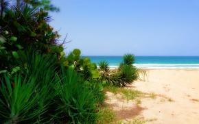Картинка sea, Beach, sand, plants