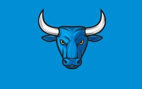 Картинка синий, минимализм, бык, bull