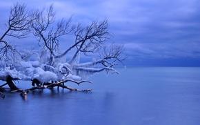 Обои лед, зима, сосульки, Канада, Уитби, озеро Онтарио, упавшее дерево