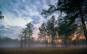 Картинка лес, пейзаж, закат, туман