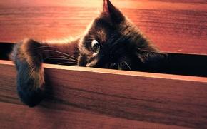 Обои кошка, играет, лапка, шкав, cat, котёнок, смотрит