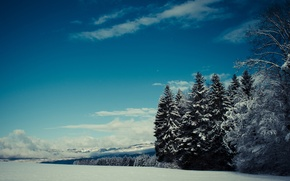 Картинка зима, лес, облака, снег, ель, хвоя
