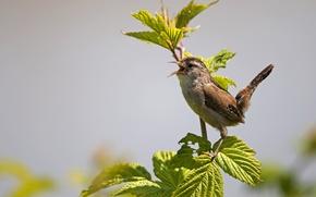 Картинка листья, фон, птица