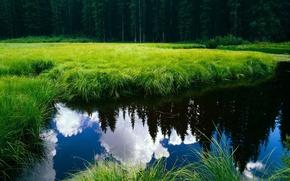 Обои лес, озеро, пруд