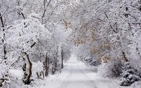 Обои Winter, Oberharz, 5° minus
