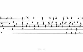 Картинка птицы, ноты, музыка, провода