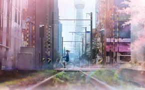 Картинка девушка, велосипед, город, провода, дома, аниме, сакура, арт, школьница, tanaka ryosuke