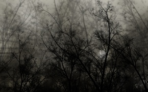Картинка ветки, черный, тень