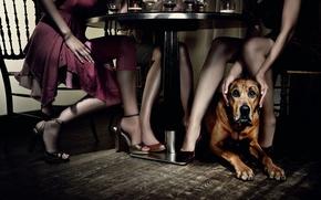 Обои собака, Стол, ресторан, девушки