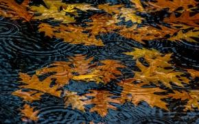 Картинка осень, листья, вода, круги