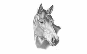 Картинка карандаш, конь, лошадь, рисунок