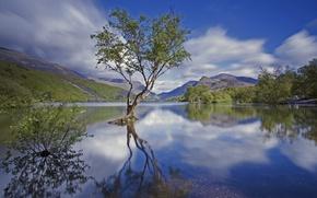 Картинка горы, озеро, дерево, Англия, национальный парк, Сноудония, Северный Уэльс