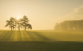 Картинка туман, утро, поле