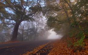 Картинка дорога, осень, листья, деревья, Кентукки, Kentucky, Парк Деву, Covington, Ковингтон, Devou Park