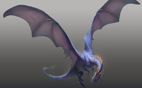Картинка синий, дракон, крылья, когти, полёт, серый фон