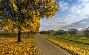 Обои дерево, дорога, осень