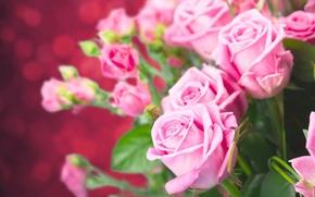 Обои розы, букет, бутоны