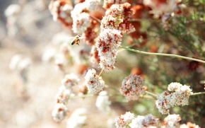 Картинка лето, цветы, пчела, солнечно