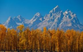 Картинка забор, небо, горы, деревья, осень, листья