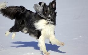 Картинка зима, снег, игра, собака, варюшка