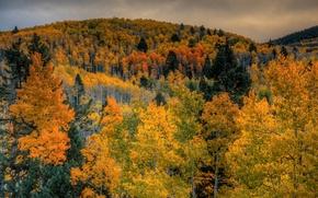 Картинка осень, лес, небо, деревья, горы, тучи
