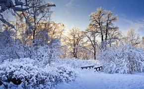 Картинка снег, деревья, ветки, зима.
