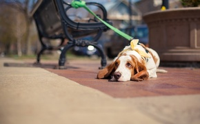 Картинка собака, взгляд, улица, друг