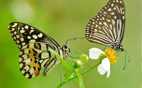 Картинка цветок, узор, бабочка, крылья, пара, мотылек