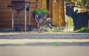 Обои прыжок, фон, котенок