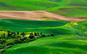 Картинка дорога, поле, трава, деревья, природа, холмы, панорама